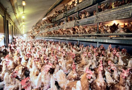 cage free aviary