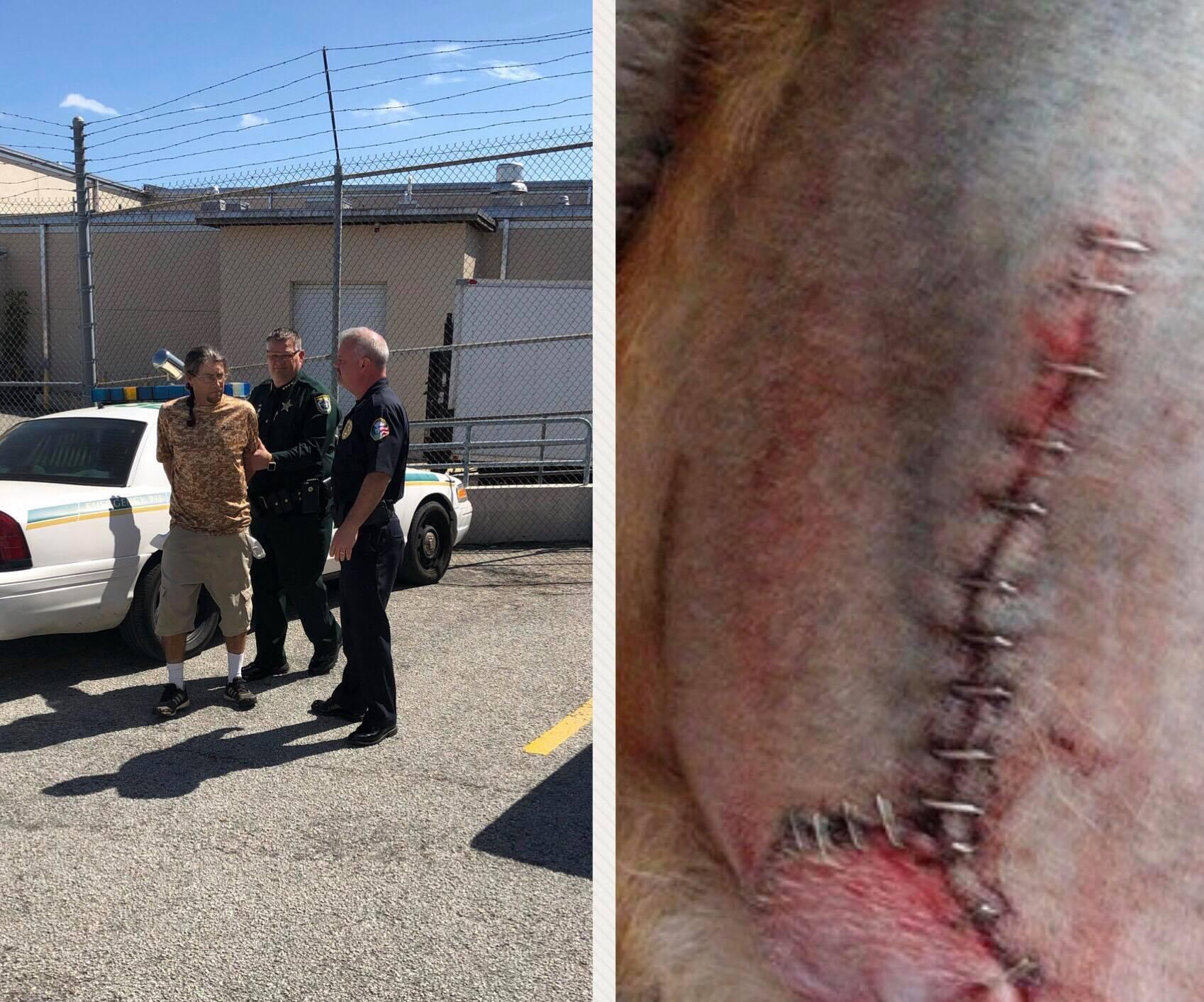 Brevard County groomer arrest_1551196059035.jpg-873774424.jpg