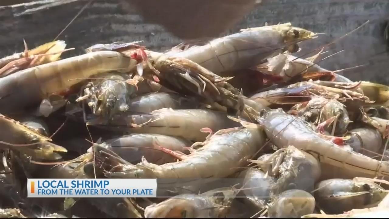 Lowcountry Shrimp Part 1