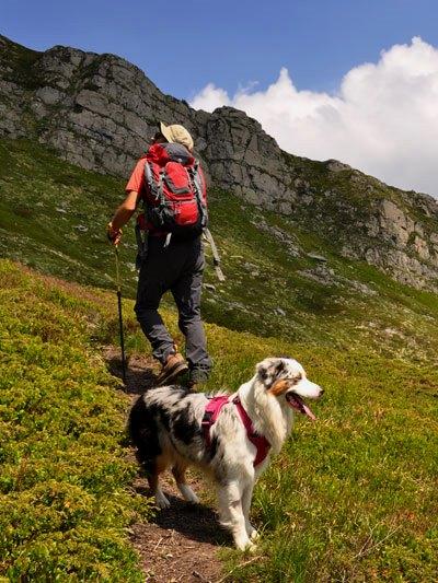 Dog trekking Siena