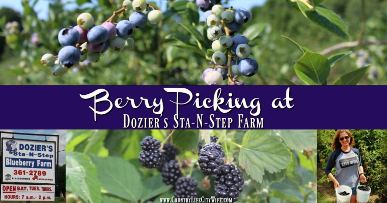Dozier's Sta-N-Step Blueberry Farm