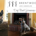 Brentwood Home Dog Bed Giveaway + Coupon
