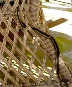 Snake in My Rocking Chair