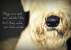dog quotes-country womans musings and deviant art
