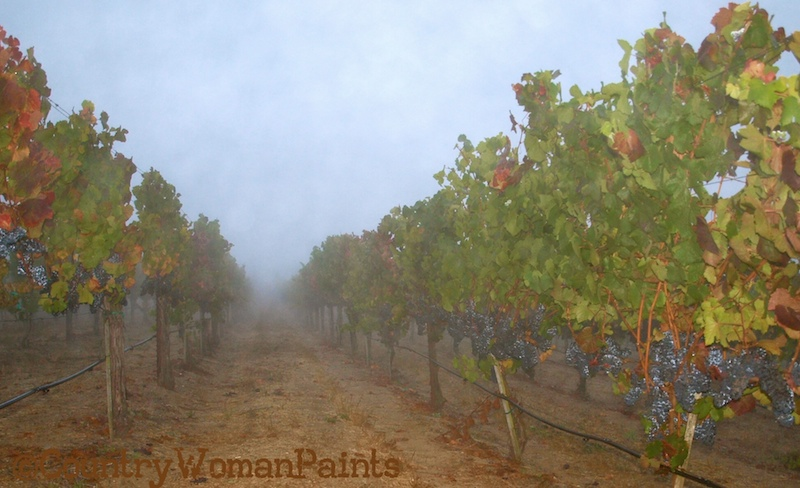 Pinot Harvest Sonoma County-©countrywomanpaints