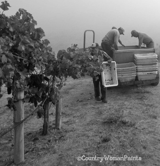 Grape Picking Begins - ©countrywomanpaints