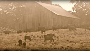 barn cows sunrise-photography by L'Adelaide, ©CountryWomanPaints