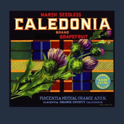 Caledonia Grapefruit Tee (navy)