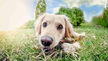 Permalien vers:Pension chiens Montauban