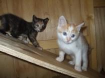 pension chat montauban gardiennage (27)