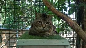 pension chat montauban gardiennage (4) (1)