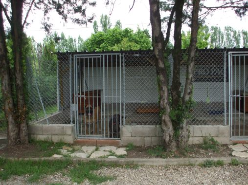 pension chat chien (17)