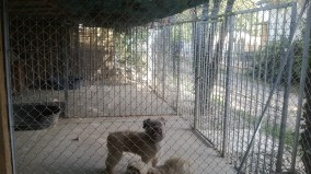 pension chat chien (4)