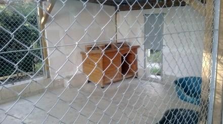 pension chat chien (5)