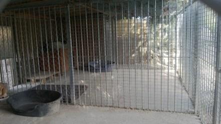 pension chat chien (6)