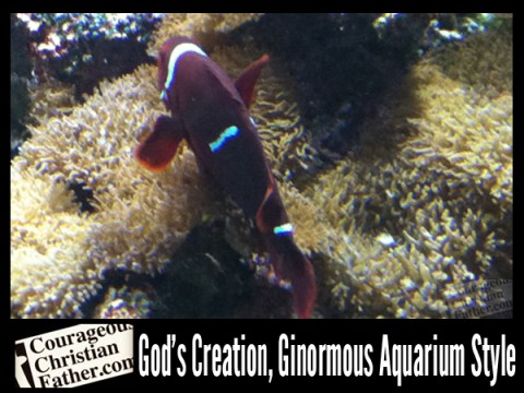 God's Creation, Ginormous Aquarium Style
