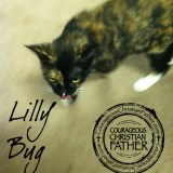 Lilly Bug - National Hug Your Cat Day