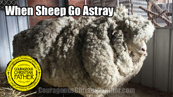 When Sheep Go Astray