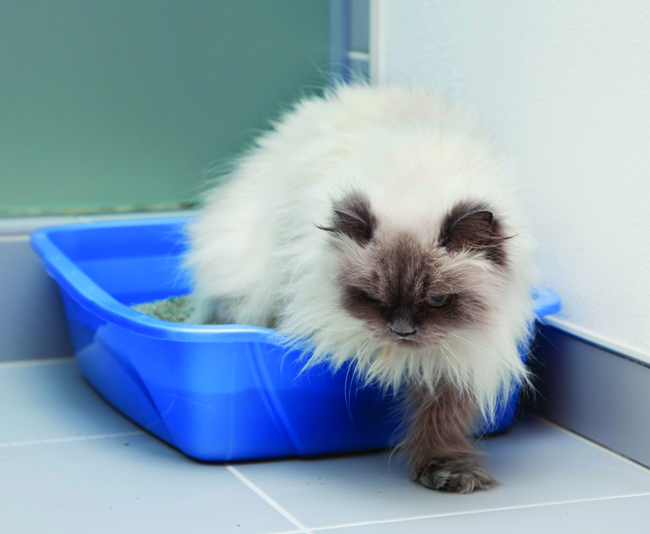 Routine maintenance can eliminate litter box problems.
