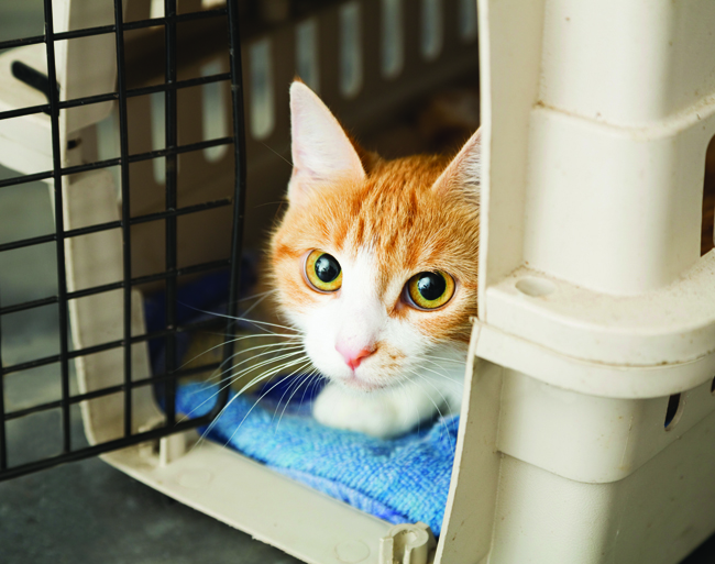 A Cat in a Pet Carrier read to go to the vet