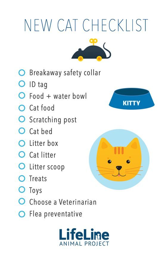 New Cat Check List by LifeLine Animal Project. Getting a new cat or kitten? This list may help you with what you need.