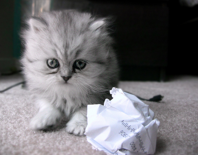 Cat-Paper-Ball.jpg
