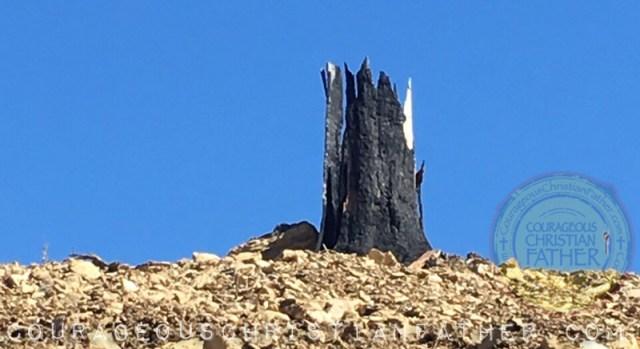 Anakeesta Memory Forest Walk (Burnt Tree Looks Like a Crown) in Gatlinburg