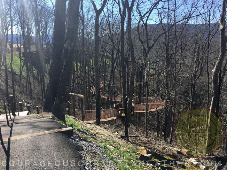 Anakeesta Tree Canopy Walk (Tree Bridge)