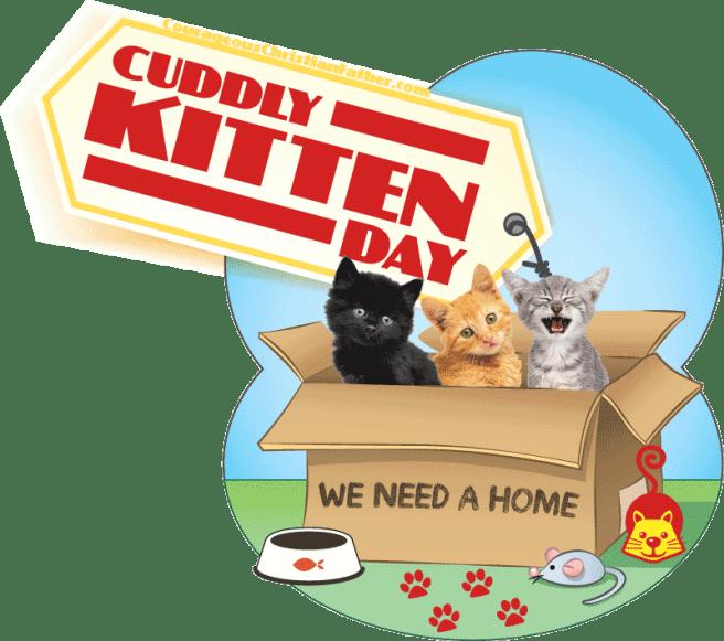 Cuddly Kitten Day