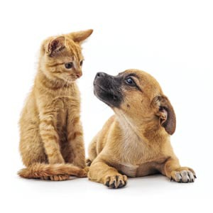 Cat and Dog (Importance of neutering and spaying)