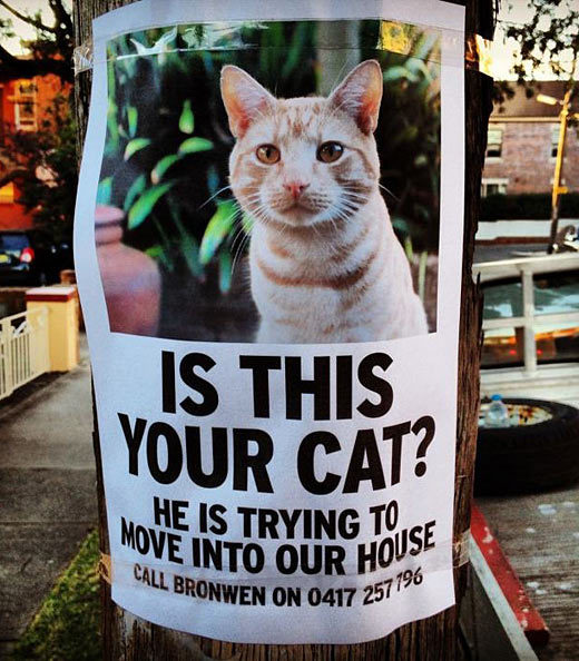 Cat Invader Poster - Here is a unique lost pet poster. Normally you will see lost please call. This is the opposite. Someone posted this cat poster saying this cat was trying to move in with them.