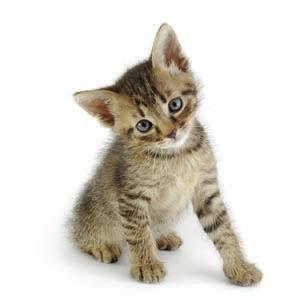 kitten-1005642