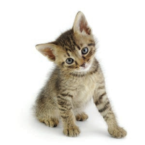 Tips for a healthy and happy kitten