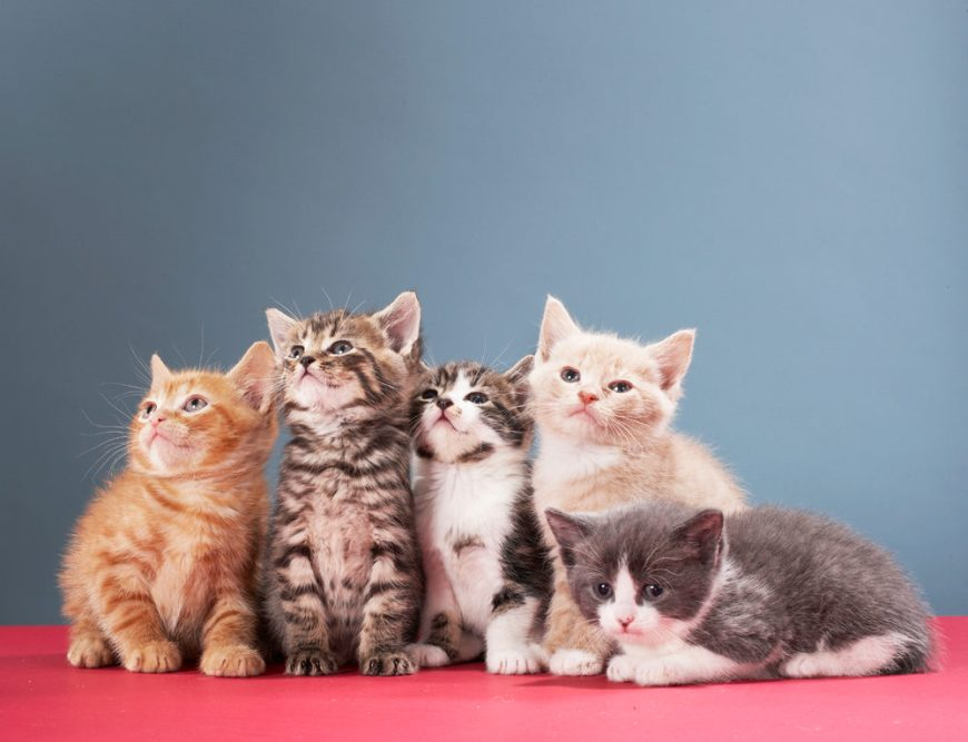 How To Save Kittens from being Killed – With kittens across the U.S. in danger of being killed in shelters, Alley Cat Allies is offering its Wait Until 8 program to help animal shelters, humane societies, and communities work together to save kittens' lives instead. #Kittens