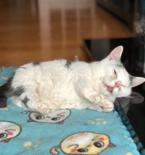 Meet Potato A Blind Cat