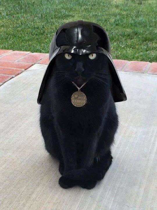 Darth Vader Cat - Check out this black cat done up like Darth Vader. I call him Darth Vader Cat. Truly a great Star Wars Cat! #DarthVader #DarthVaderCat #StarWarsCat