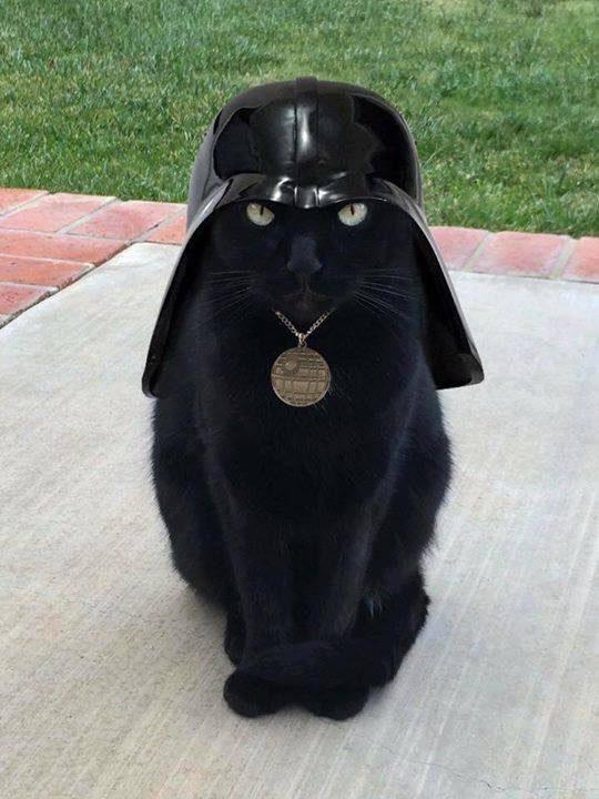 Darth Vader Cat - Check out this black cat done up like Darth Vader. I call him Darth Vader Cat. Truly a great Star Wars Cat! #DarthVader #DarthVaderCat #StarWarsCat