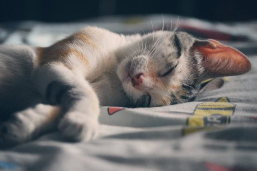 Cat Nap - Do you like taking a nap? Did you know cats spend a lot of their time sleeping? #CatNap