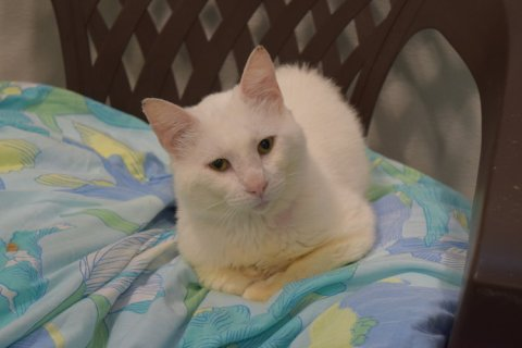 One of the 193 Rescued Cats from St. Hubert's Animal Welfare Center in New Jersey.