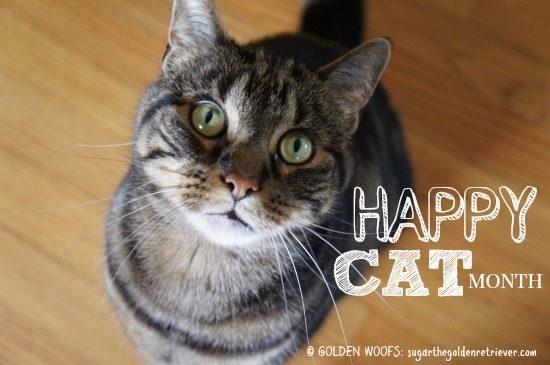 happy_catmonth-8974401
