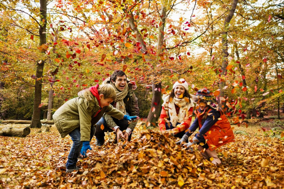 10+ Uses for Fallen Leaves - Cleaning up leaves is considerable work, but not all of those leaves need to be carted away. In fact, there are several different uses of leaves that can be beneficial.