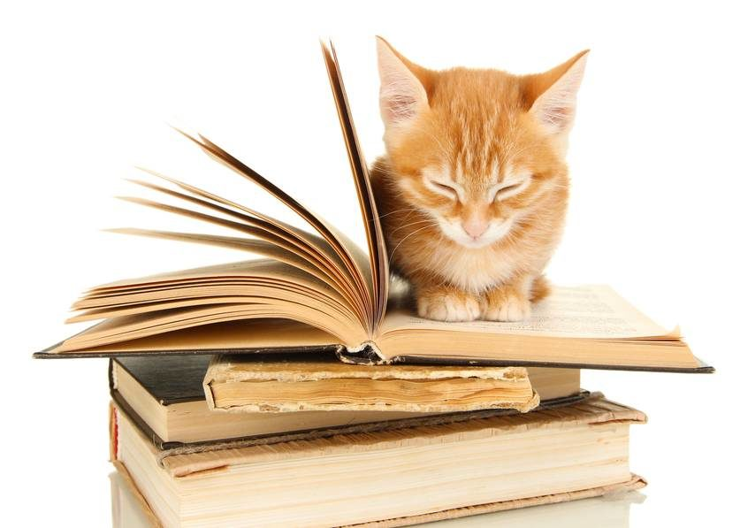 kitten-books-2911942