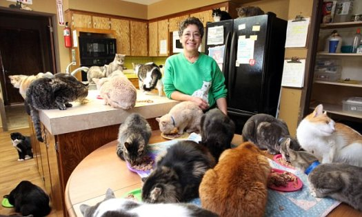 Cat Lady Lives with 1,000 Cats - Can you imagine sharing a house with over 1,000 cats? This one Cat lady does just that at The Cat House of the Kings. #CatLady #1000Cats #CatHouseoftheKings