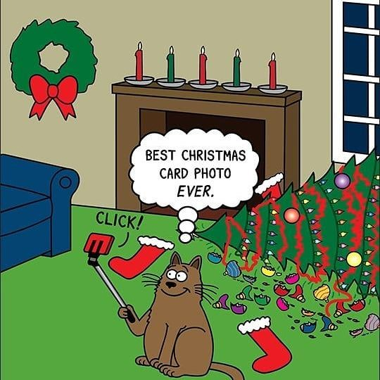 cat-christmas-card-photo-6750788
