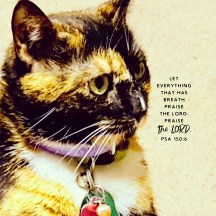Lilly Bug of 2 Cats and a Blog - Let everything that has breath praise the Lord. Praise the Lord. Psalm 150:6