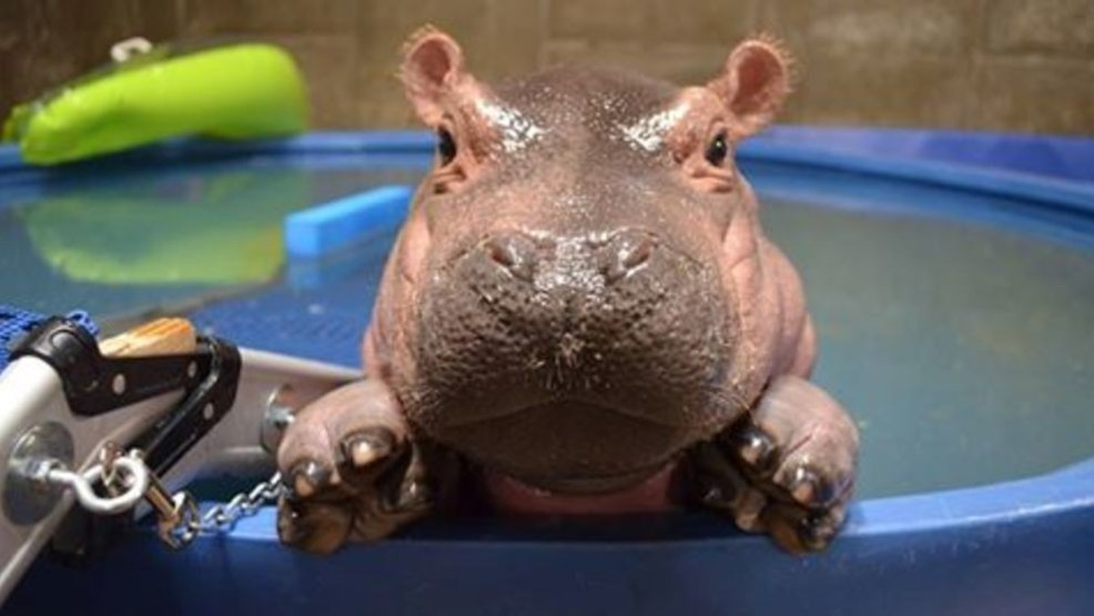 Hippo Day