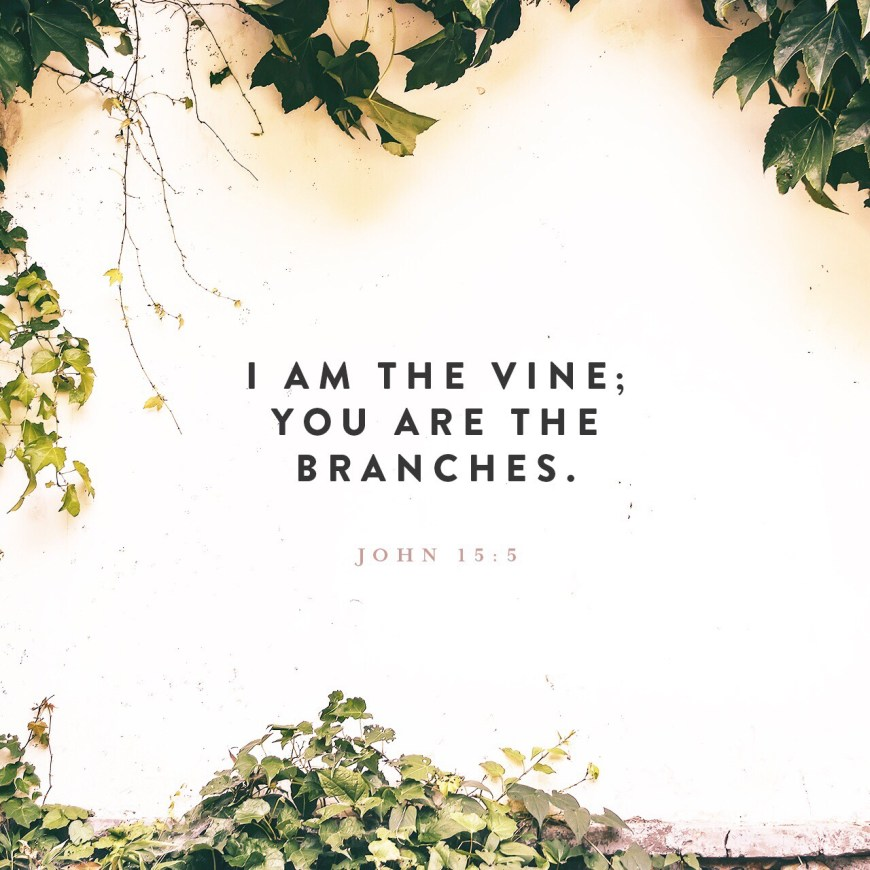 """VOTD May 28, 2019 """"I am the vine, you are the branches; he who abides in Me and I in him, he bears much fruit, for apart from Me you can do nothing."""" JOHN 15:5 NASB"""