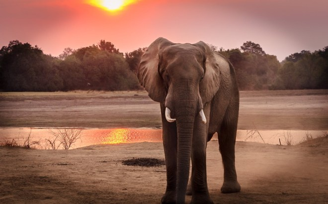 World Elephant Day - another day dedicated to the preservation and protection of the world's elephants. #WorldElephantDay