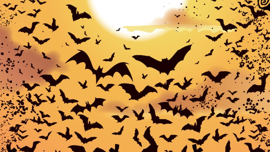 Bat facts - Literature and Hollywood have done much to villainize bats, which many people perceive to be dangerous, blood-sucking creatures that prey on unsuspecting victims. However, bats are far less menacing than that. #Bats