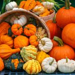 Gourds, squashes and pumpkins, oh my!
